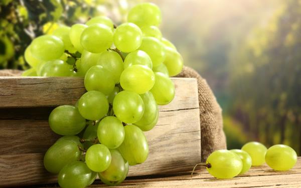 Виноград-белый