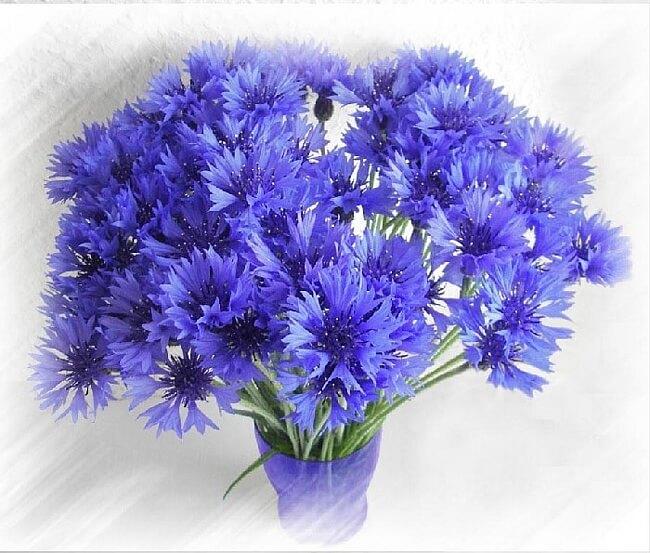 Красивые и самые лучшие букеты из живых цветов своими