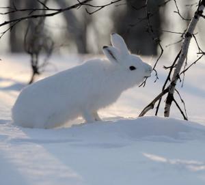 защита деревьев зимой