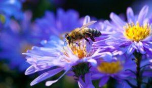 пчелы в саду