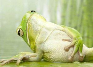 жабы поедают слизней на огороде